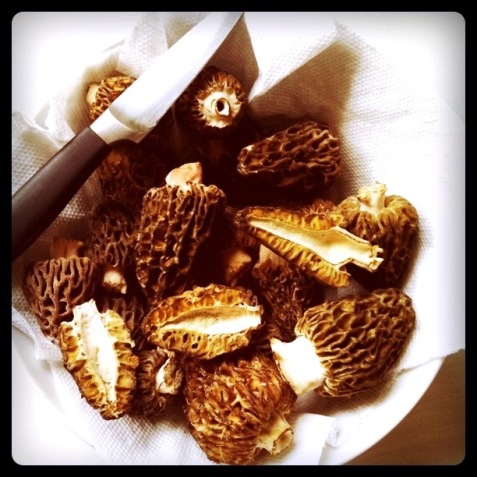 morel-bowl
